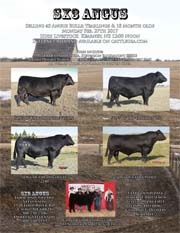 Special Bred Heifer & Cow Auction
