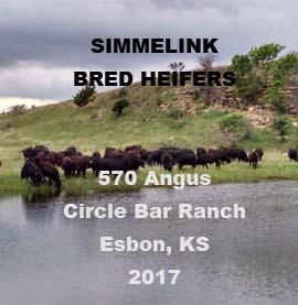 Simmelink Bred Heifers
